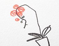 Minimal illustrations