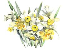 Daffodils and irises
