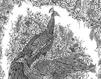 Illustration: Peacocks