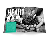 Observer — Magazine