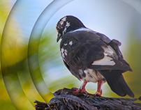 Oiseau du Sud