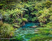 Blue Spring, New Zealand