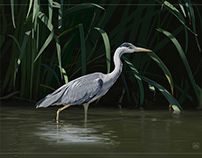 New bird paintings