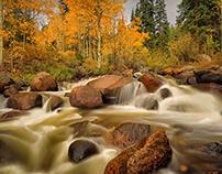 Aspens and the River Colorado