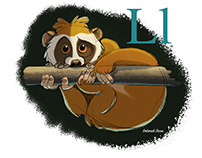 L is for Loris Monkey