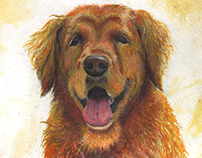 Casey- pet portrait