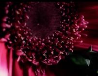 Intro// Flowers // Editing video