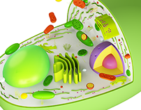 3D Models: Microbiological Life