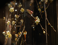 DAVID YURMAN Window Concept Spring 15-Spring Blossom