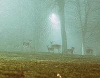 The Mist