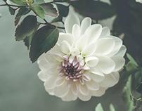 Still-life: Flowers