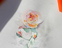 Watercolor roses.