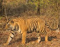 Wilderness at Bandhavgarh National Park