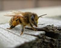 Urban Beekeeping in Vancouver