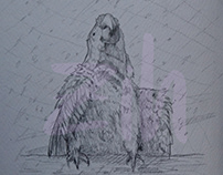 MRN @Punta Islita,CR sketchbook -Macaw Recovery network