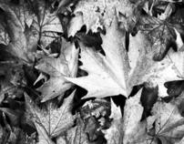 Autumn, melancholy