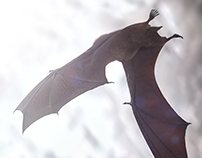 "Bacardi ""Bats"" // 3D // CGI"