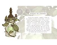 -Atropa belladonna/Deadly Nightshade