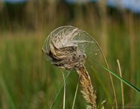 Trawa/Grass
