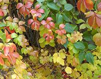 Creativity of the artist of autumn.