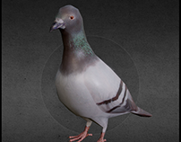 Pigeon 3D Low Poly