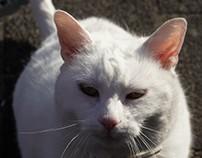 ~Le Chat Blanc~