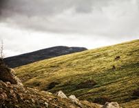National Parks 2012
