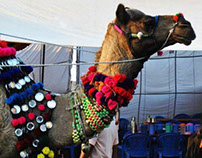 Pushkar Camel Fair 2013