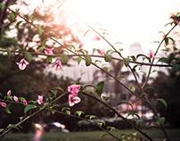 Jardim therapy
