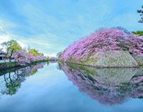 Đến Nhật Bản,Hàn Quốc,Đài Loan ngắm hoa anh đào thôi