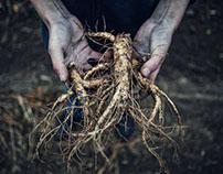 Wisconsin Ginseng Farming