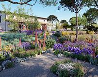 Globeplants bundle 16 : Mediterranean garden