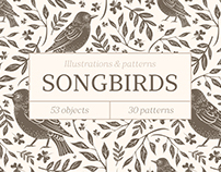 Songbirds. Vector illustrations & patterns