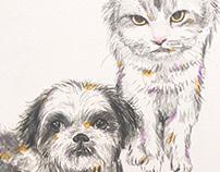 Pets illustraton/2018