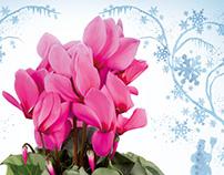 CMA - Blumen