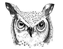 Owl/ Búho