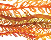 Autumnal Dive
