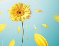 Alissar Flowers - Eid Campaign