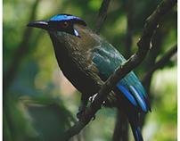 Colombian Birds
