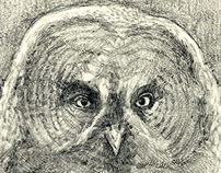 Just another Owl Sketch