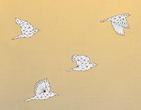 Polygonesia
