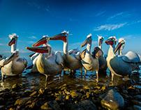 Lake Kerkini, Greece, Europe