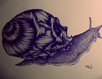 Escargot skull