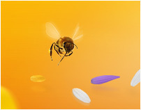 IV All-Ukraine Honey Holiday website design