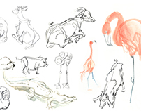 Animal Drawing