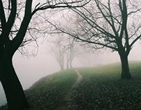 Fog and Silence