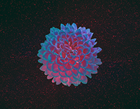 Flora / free HD wallpaper