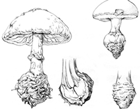 Fungi Morphology : Bulbous, Conic