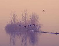 My foggy Copenhagen