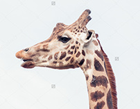 Animals - Stock Photos